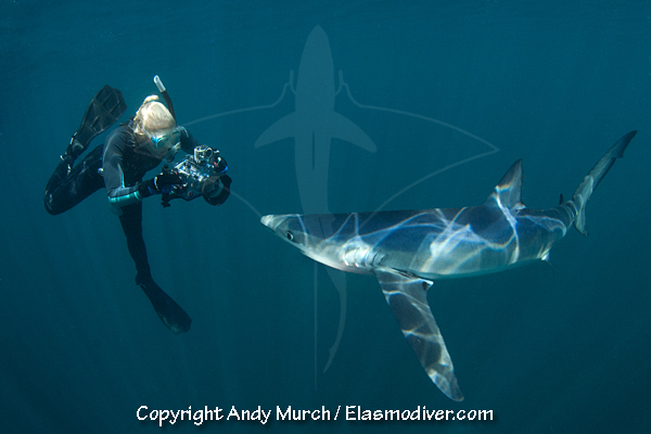 Diver shark diving with a shark.