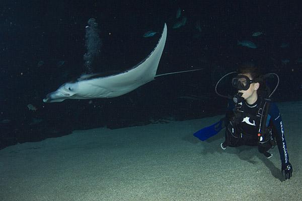 Shark Pictures: The Shark Tour Blogs: Georgia Aquarium ...