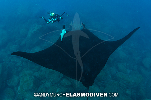 But before then  we have a lot of other amazing encounters to enjoy   Biggest Tiger Shark In The World